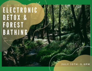 Electronic DETOX & Forest Bathing @ Lupin Lodge